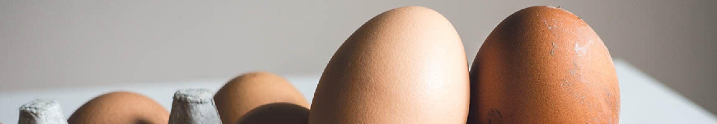 Wie viele Eier pro Tag/pro Woche - Fazit