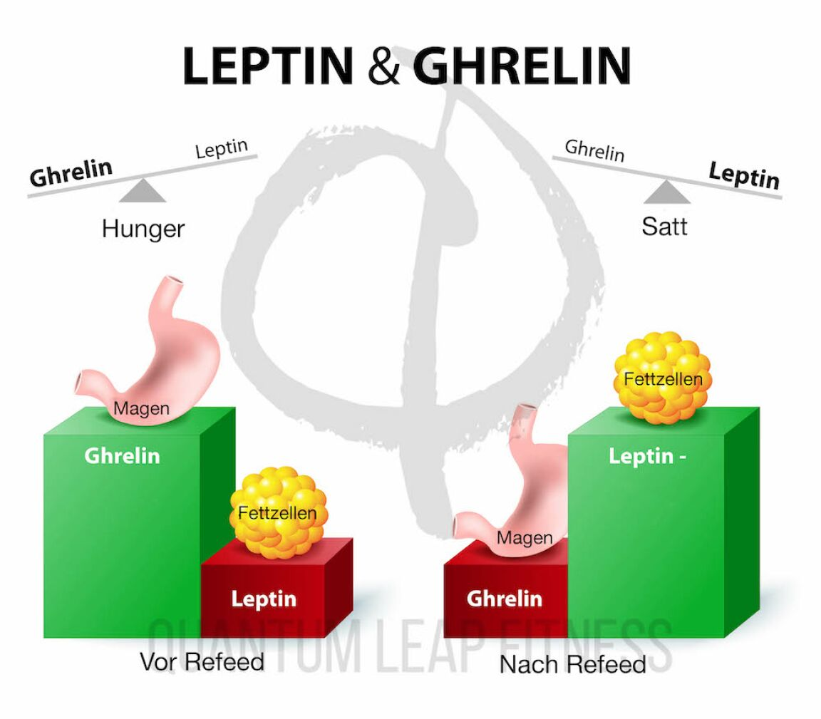 Hormones,Regulating,Appetite.,Leptin,The,Satiety,Hormone.,Ghrelin,The,Hunger