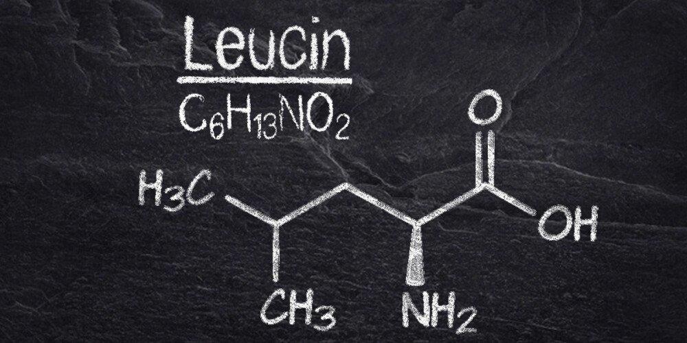 Leucin - Die wohl wichtigste Aminosäure für den Muskelaufbau